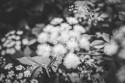 flower, nature, plant, outdoor, garden, blur, black and white