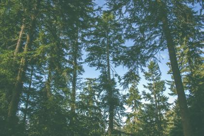 trees, leaves, branches, forest, woods, nature, green, blue, sky, sunshine, summer