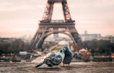 bird, couple, beak, paris, eiffel tower, urban, city, architecture, infrastructure, structure