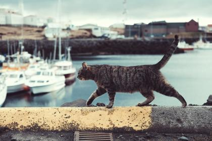cat, pet, animal, outside, sea, water, coast, boat, yacht, transportation, travel, blur