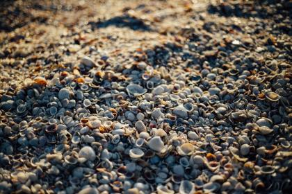 sea shells, beach, sand, rocks, pebble, sunshine, summer, shore