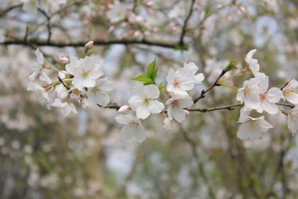 flower, bloom, blossom, petals, leaf, blur, bokeh, tree, nature