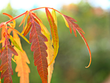 fall,  leaf,  nature,  autumn,  garden,  orange,  foliage,  season,  plant,  colorful,  leaves,  close up,  background