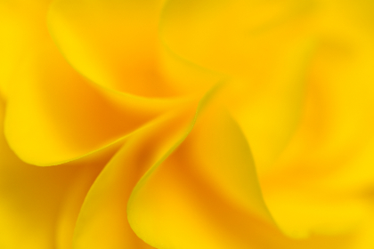 Photo of soft yellow flower