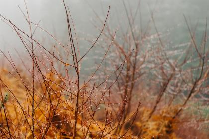 dew, water, drops, branches, woods, nature