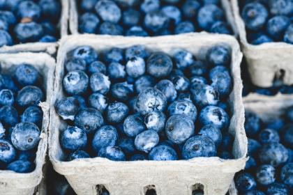 free photo of blueberries  blueberry