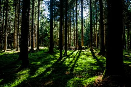 forest, woods, green, trees, branches, grass, bark, tree trunks, shadows, sunlight
