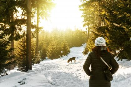 snow, winter, white, cold, weather, ice, trees, plants, nature, people, woman, travel, adventure, trek, dog, woods, forest