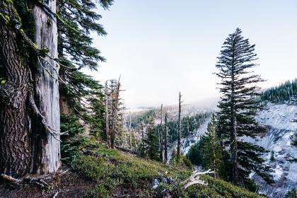 trees, forest, woods, nature, sky, landscape, cliff, snow, cold, winter, mountains, hills