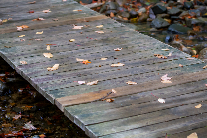fall,   leaves,   wood,   foliage,   autumn,   nature,   outdoors,  bridge,  wooden,  trail,  path,  forest,  hiking