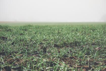 green, grass, field, foggy, nature, countryside, rural