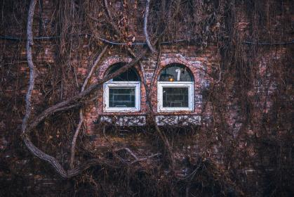 house, home, residence, exterior, bricks, wall, windows, panes, branches, vines, fall, autumn, dry, brown