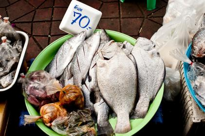 fish, seafood, wet, market, price tag, meat, pack