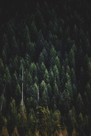 Photo of a forest