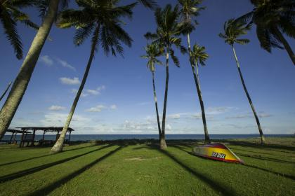 coconut, tree, green, grass, beach, coast, sea, water, ocean, hut, cottage, shade, boat, outdoor, summer, vacation