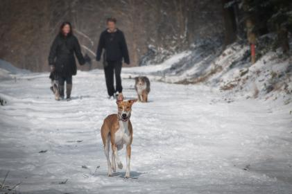 people, man, woman, couple, married, dog, animal, snow, winter, cold, weather