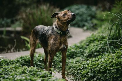 dog, animal, pet, green, grass, outside, plant, nature