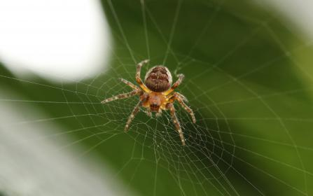 free photo of web  spider
