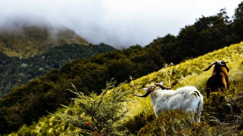 nature, mountain, landscape, clouds, sky, horizon, summer, travel, hike, climb, rams, animals, green