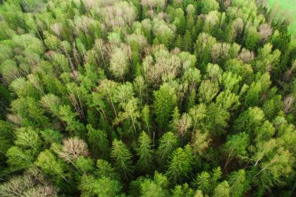 green, plants, nature, aerial, view, forest