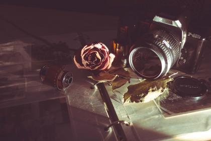 camera, old, vintage, film, lens, analog, shutter, iso, aperture, manual, rose, petal, autumn, fall