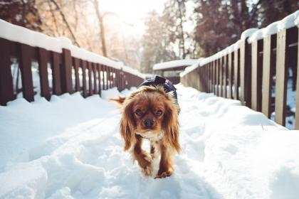 animal, dog, pet, friend, snow, trees, nature, fence, cold, ice, wooden, house, outdoor, white, brown
