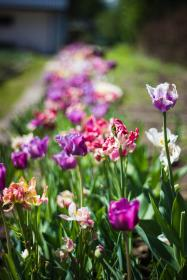 green, leaf, plant, nature, blur, sunny, day, daylight, colorful, flower, field, garden, farm, outdoor
