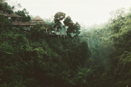trees, house, nature, view, green, forest, vacation, terrace, trunk, adventure, trip, travel, nipa, hut