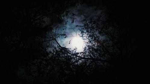 trees, woods, forest, dark, night, moon, clouds, sky
