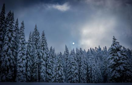 moon, pine, trees, clouds, sky, snow, fog, winter, nature, dark, forest