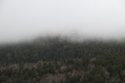 forest,  mountain,  fog,  clouds,  weather,  climate,  environment,  nature,  outdoors,  hiking,  exploring,  trees