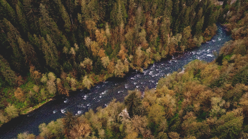 Photo of aerial forest