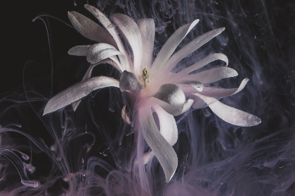 creative,  abstract,  flower,  dark,  smoke,  rings,  petals,  art,  blossom,  artistic,  still,  life,  plant,  natural,  pattern,  floating