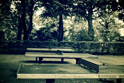 ping pong, table tennis, net, park, bushes, trees, sports