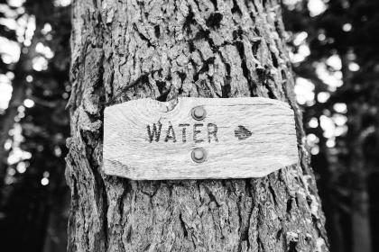 tree trunk, sign, water, black and white