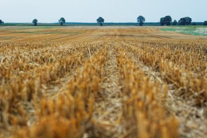 field, crops, agriculture, nature, landscape, rural, countryside, grass, trees