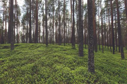 forest, trees, woods, green, grass, nature, plants