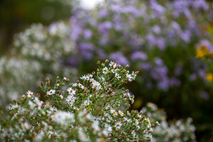free photo of small   flowers
