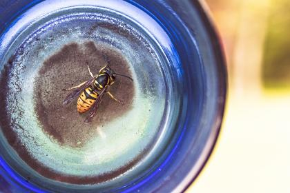 wasp, bee, insect, blue, glass