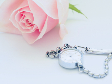pink rose,  silver,  watch,  pink,  jewellery,  romantic,  white background,  wallpaper,  woman