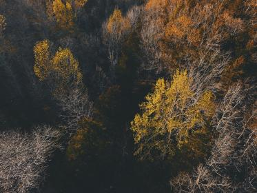 nature, landscape, woods, forest, trees, leaves, aerial, travel, adventure, autumn, fall