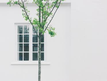 house, home, residence, exterior, window, panes, walls, tree, branches, leaves, minimalist, white