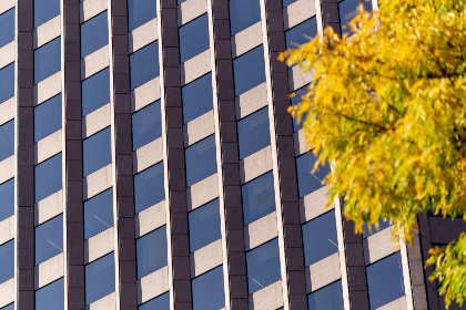 office,   windows,   exterior,   facade,   pattern,   modern,   business,   building,   wall,   glass,   architecture,   city,   urban,   corporation,   design,   downtown,  autumn