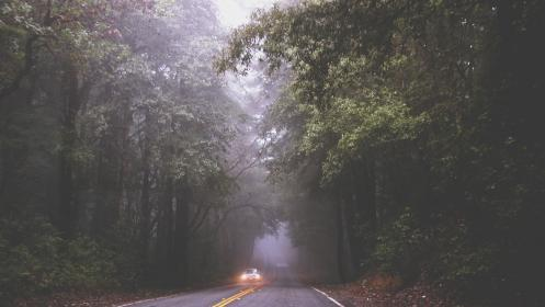 road, fog, mist, car, driving, headlights, pavement, trees, forest, woods