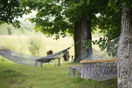 hammocks, trees, leaves, grass, nature, country, rural, relaxing, chill