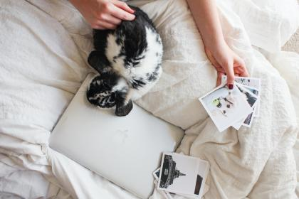laptop, apple, macbook, computer, browser, research, study, bedroom, bed, sheets, puppy, dog, pictures
