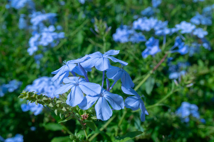 flowers,  blue,  plant,  garden,  wild, nature, outdoors, spring