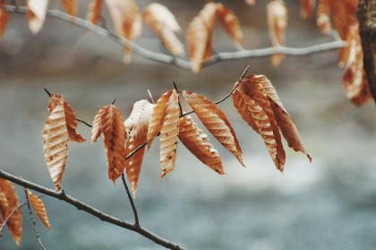 leaves, nature, dried, summer, trees