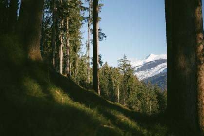 nature, forests, trees, grass, mountains, summit, peaks, views, snow, sky