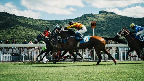 green, field, grass, animal, horse, racing, sport, game, people, ride, men, cowboy, landscape, mountain, view, outdoor, adventure